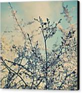 I Hope Spring Will Be Kind Canvas Print