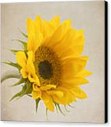I See Sunshine Canvas Print by Kim Hojnacki