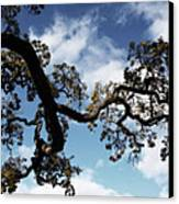 I Touch The Sky Canvas Print by Laurie Search