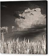 If You Build It He Will Come Canvas Print by William Fields