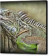 Iguana Named Mack Canvas Print