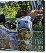 I'm All Ears Canvas Print by Kaye Menner