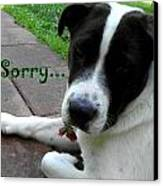 I'm Sorry  Canvas Print