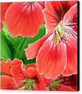 In The Garden. Geranium Canvas Print by Ben and Raisa Gertsberg