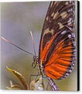 In The Morning Canvas Print by Jill Balsam