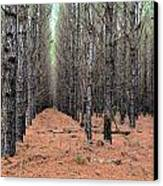 In The Pines Canvas Print by Bob Jackson