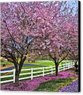 In The Pink Canvas Print by Debra and Dave Vanderlaan