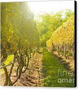 In The Vineyard Canvas Print by Diane Diederich
