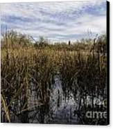 In The Weeds Canvas Print by David Taylor