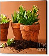 Indoor Plant Canvas Print by Boon Mee