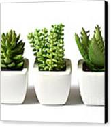 Indoor Plants Canvas Print by Boon Mee