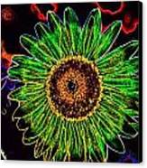 Inside Out Sunflower Canvas Print by Michelle Ressler