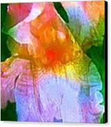 Iris 53 Canvas Print by Pamela Cooper