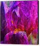 Iris Abstract Canvas Print by J Larry Walker