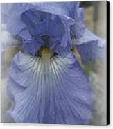 Iris Heart Canvas Print by Kay Novy