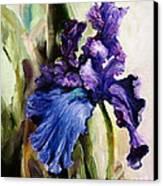 Iris In Bloom 2 Canvas Print