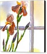 Irises In The Window Canvas Print by Kip DeVore