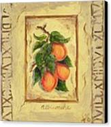 Italian Fruit Apricots Canvas Print by Marilyn Dunlap