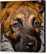 Its A Dogs Life Canvas Print by Ronny Sczruba