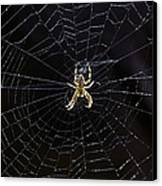 Itsy Bitsy Spider My Ass 2 Canvas Print by Steve Harrington