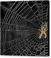 Itsy Bitsy Spider My Ass 3 Canvas Print by Steve Harrington