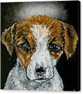 Jack Russell Terrier Angel Canvas Print by Jay  Schmetz