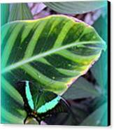 Jade Butterfly With Vignette Canvas Print