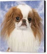 Japanese Chin Dog Canvas Print by John Daniels