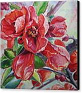 Japanese Quince In Blossom Canvas Print