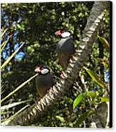 Java Sparrows Canvas Print by Colleen Cannon