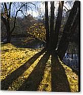 Jewel In The Trees Canvas Print by Debra and Dave Vanderlaan