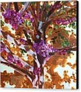 Judas Tree Jerusalem Canvas Print by Nigel Radcliffe