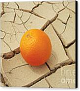 Juicy Orange And Drought. Canvas Print by Alexandr  Malyshev