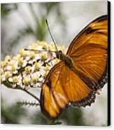 Julia Butterfly Canvas Print by Adam Romanowicz