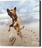 Jumping Dog Canvas Print by Eldad Carin