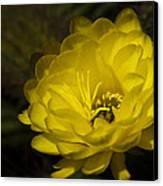 Just Call Me Mellow Yellow  Canvas Print
