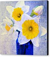Just Plain Daffy 2 In Blue - Flora - Spring - Daffodil - Narcissus - Jonquil  Canvas Print