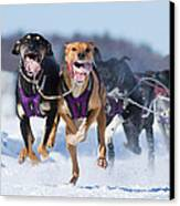 K9 Athletes Canvas Print by Mircea Costina Photography
