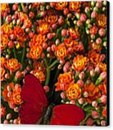 Kalanchoe Plant With Butterfly Canvas Print by Garry Gay