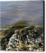 Kelp In Sea Canvas Print by IB Photo