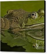 Kermit Canvas Print by Susan Candelario