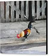 Keywest Florida Rooster Canvas Print by Judy Paleologos