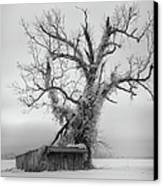 Killer Tree - Outer Banks Canvas Print