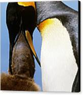 King Penguin Feeding Chick Canvas Print by Art Wolfe