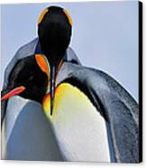 King Penguins Bonding Canvas Print by Tony Beck