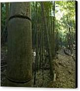 Kissing Bamboo Canvas Print by Aaron Bedell