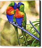 Kissing Rainbow Lorikeets 8 Canvas Print by Heng Tan