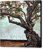 Knotted Tree Canvas Print by Daniel Hagerman