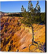 Know Your Roots - Bryce Canyon Canvas Print