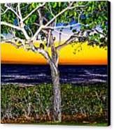 Ko Olina Tree In Sunset Canvas Print